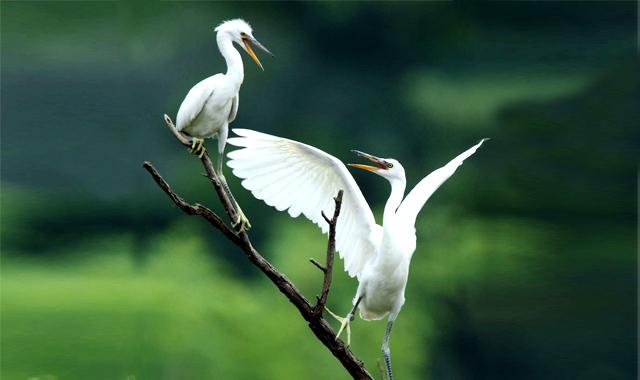 白洋淀是中国北方重要的淡水湖泊和天然湿地保护区,拥有143个淀泊、3700多条水路,在调节地区气候、保持生态多样性、为鸟类提供迁徙和栖息地、补充周边地下水等方面发挥着不可替代的作用。 白洋淀有水生植物406种、浮游动物26种、鱼类54种、野生鸟类达200余种,是一处天然的科普场所。在白洋淀发现的国家二级保护鸟类有白琵鹭、大天鹅、小天鹅、白额雁、鸳鸯、鸢、苍鹰、雀鹰、松雀鹰、大鵟、普通鵟、毛脚鵟、白尾鹞、鹊鹞、鹗、游隼、红隼、红脚隼、燕隼、灰鹤、蓑羽鹤、纵纹腹小鸮、长耳鸮、短耳鸮、红脚鸮、领角鸮等。在白洋